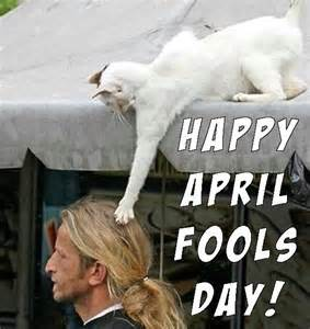 Funny April Fools Memes - cat ready for hilarious prank image 2682170 by miss
