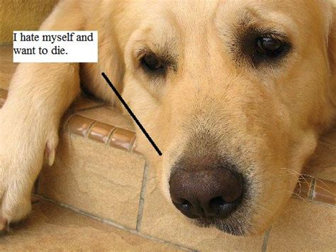 depressed puppy depression in dogs pets aware news