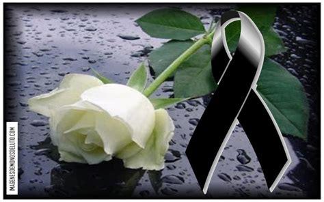 imagenes de luto blancas lindos mo 241 os de luto con una rosa blanca para perfil