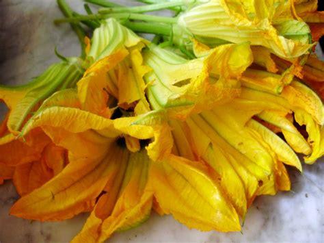 fior di zucca fiori di zucca ripieni la ricetta perfetta dello chef