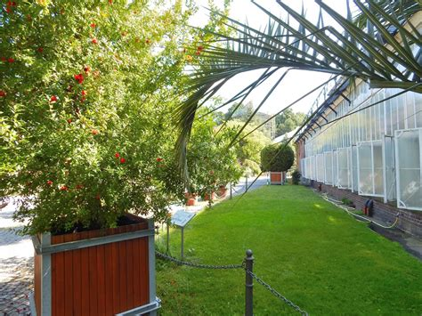 berlin dahlem botanischer garten panoramio photo of die gew 228 chsh 228 user botanischer