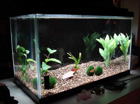 aquarium design homemade home accessories cool aquarium decorations how to build