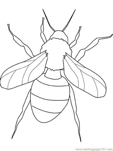insect coloring pages free coloring home