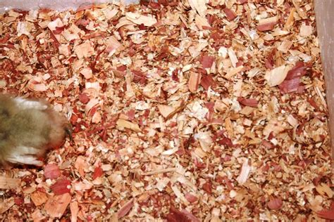 Bedding Material choices for Chickens Coop   The Poultry Guide