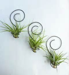 air plant wall holder reserved for shannon0401 three wire air plant holders by glassetc