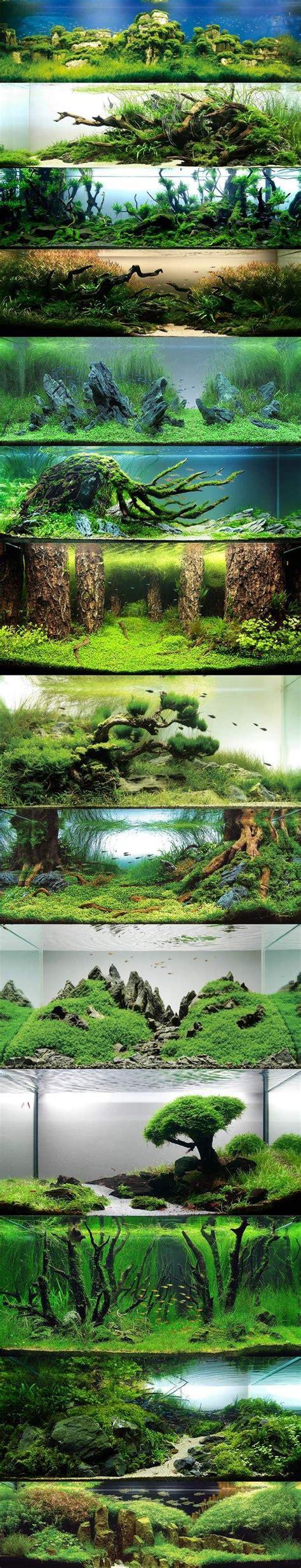 best fan for aquarium 161 best images about fish tank on pinterest shrimp