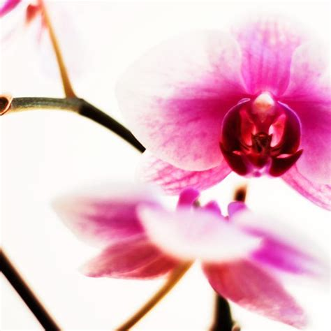 how to make orchids rebloom what to do fall and flower