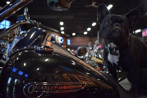 Harley Davidson Factory Tour Milwaukee by All The Tours You Can Take In And Around Milwaukee