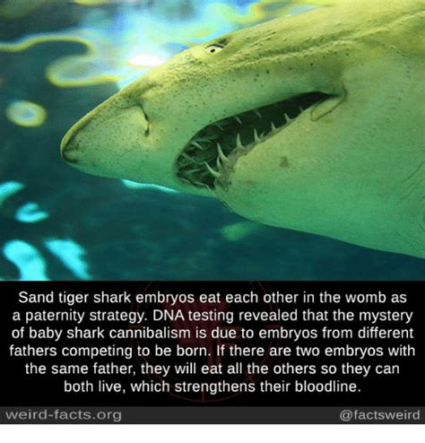 baby shark song wikipedia baby shark in the womb