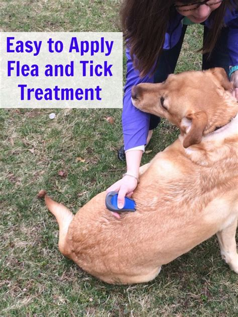 flea and tick easy to apply flea and tick treatment nepa