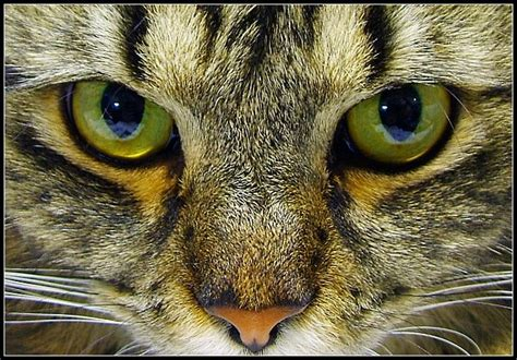 cat eye grace elliot cat s seeing is believing