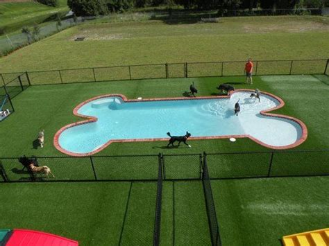pools for dogs best 20 pet resort ideas on boarding kennels hotel and animal
