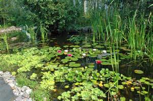 Pond Plants   Car Interior Design