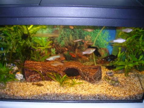 Aquarium Komplettset 60 L 1014 by Mp 60 L Komplettaquarium Aquarien Und Zubeh 246 R