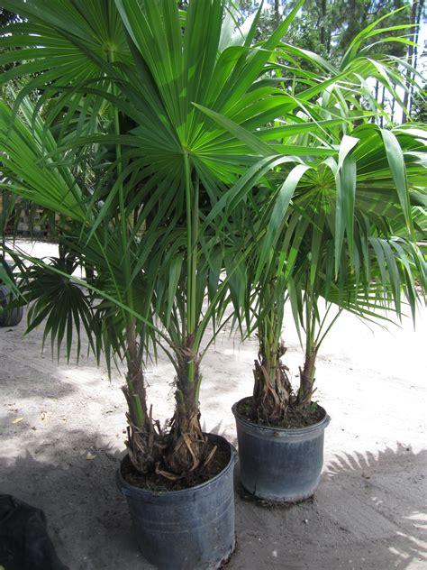 miami tropical plants tropical plant company in miami