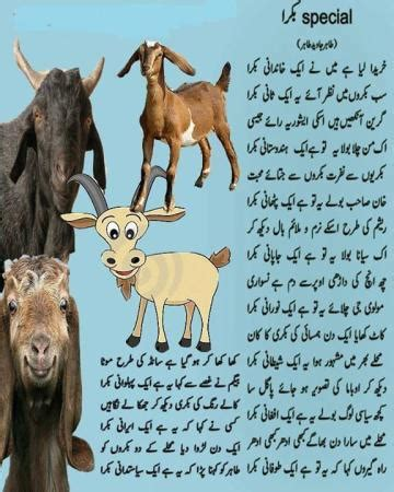 bakra eid special poem bakra eid images & photos