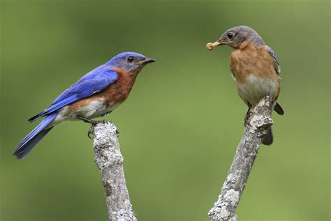 learn more about your bird s quirky behavior
