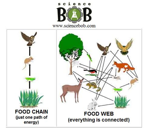food webs on pinterest food chains science and food mastrianascience food chains and webs