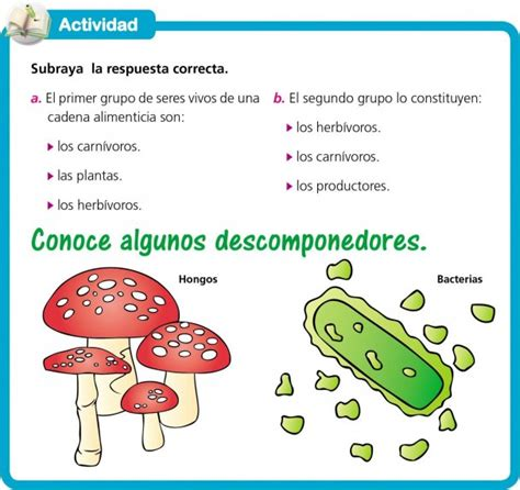 cadena alimenticia quienes son los productores descomponedores edicion impresa abc color