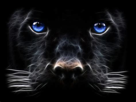 black panther animal desktop wallpaper panther computer wallpapers desktop backgrounds