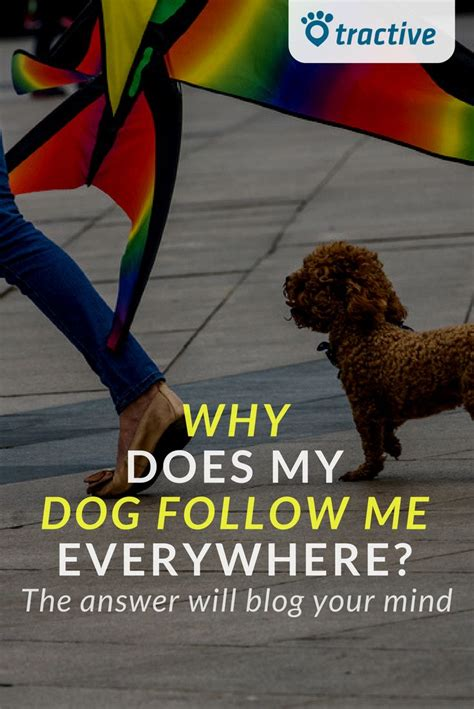 why does my follow me everywhere 3092 best great blogs images on your and a