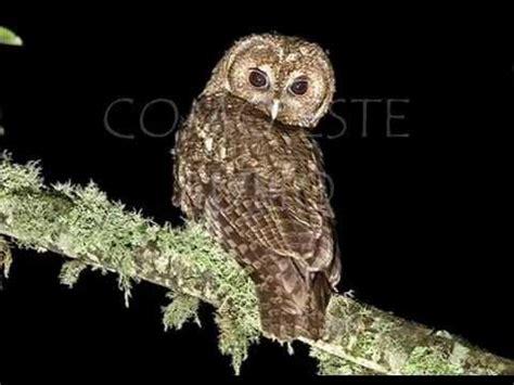 imagenes animales nocturnos animales nocturnos youtube
