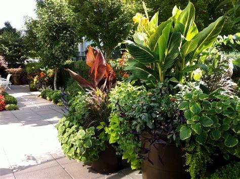 tropical container garden a modern tropical garden 2012 tropical landscape