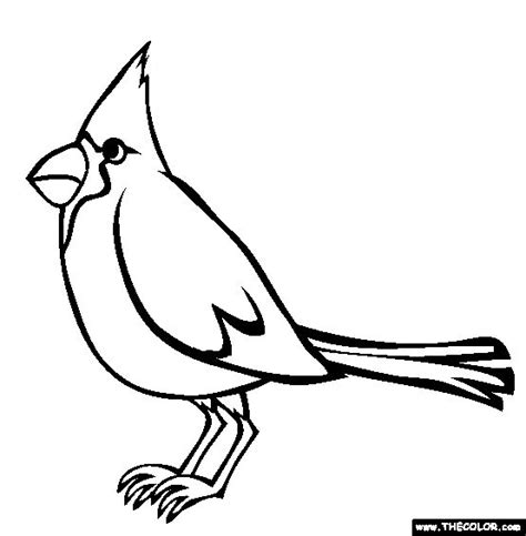 cardinal coloring pages preschool 29 best school spiritwear cardinals images on pinterest