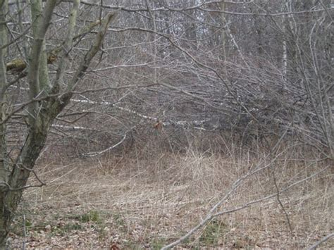 how to find deer bedding areas make deer beds part 2 grand view outdoors