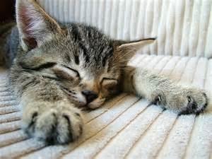 kater pinkelt auf teppich ver 228 nderungen sind f 252 r katzen stress