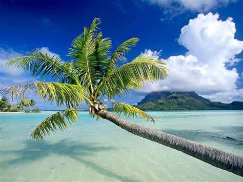 palma pianta da giardino palma pianta piante da giardino palma pianta