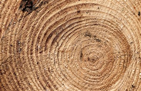 wood cross section wood cross section free images for commercial use