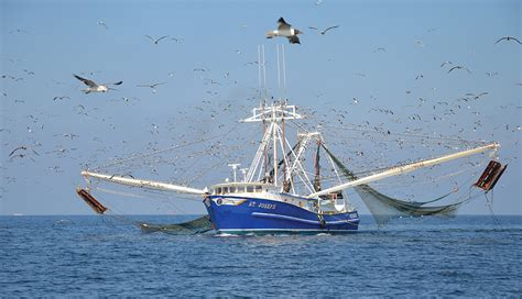 shrimp trawl boats for sale we are the sneakyshrimpmen