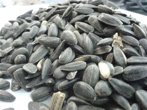 black sunflower seed 1kg ssblan 163 2 49 pet perfection