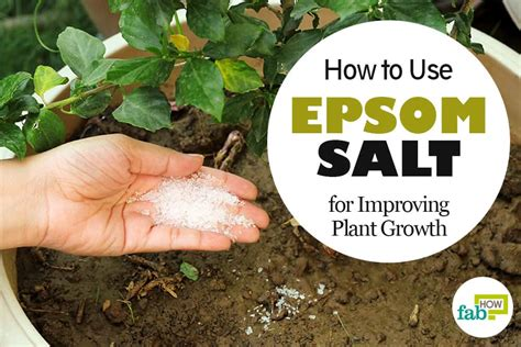 Epsom Salt In Garden by How To Use Epsom Salt In Garden For Improving Plant Growth