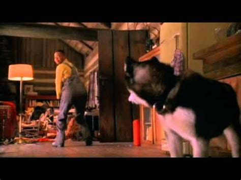 cuba gooding jr sled dog movie dog movies list of best dog films