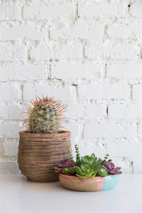 decorar con plantas suculentas suculentas plantas para hacer decoraci 243 n original para el
