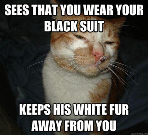 No Butt Meme - no pain in the butt cat memes 20 pics izismile com