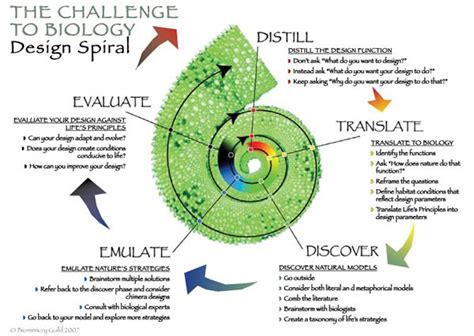 design philosophy definition biomimicry joe s research