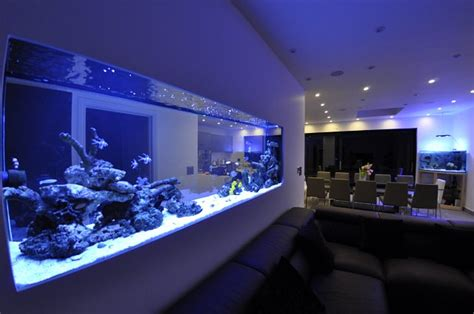 wall aquarium in wall aquarium and wall aquarium aquatic gems gallery