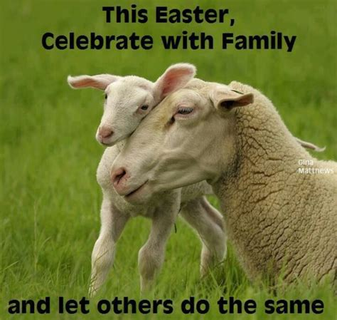 all about that baby sheep stuff lyrics the last i ate was easter ham so this meme seems