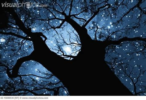 tree silhouette against starry night sky harmonia tree silhouette against starry night sky night sky