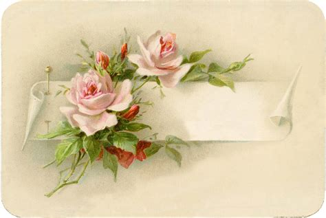vintage roses beautiful varieties exceptionally beautiful vintage roses with pin image the graphics fairy