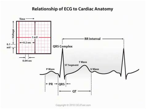 ecg pattern analysis for emotion detection image gallery ecg phases