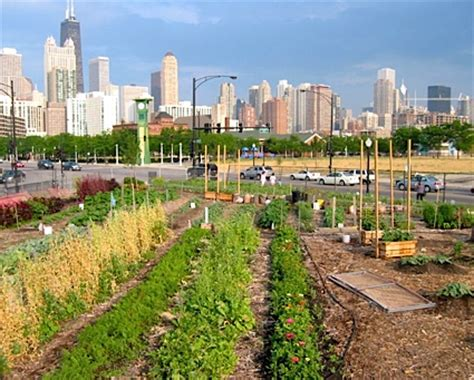 city farming a how to guide to growing crops and raising livestock in spaces books the anarchist ecosystem agriculture beyond revolution
