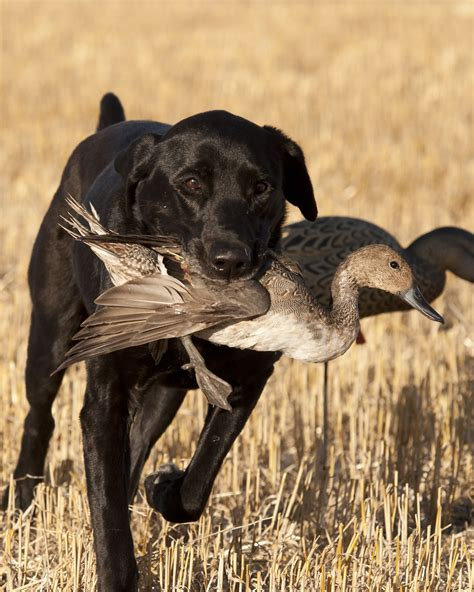 list   good names   hunting dog  wow