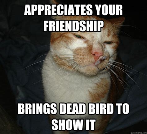 Memes Friendship - appreciates your friendship cat meme cat planet cat planet
