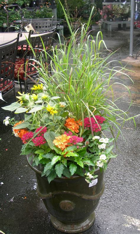 pot with different flowers plants by the front door oh how your garden grows pinterest