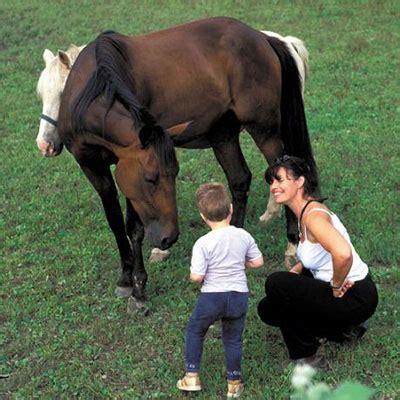 promenade mthode de franais 8467562641 les chevaux du bonheur