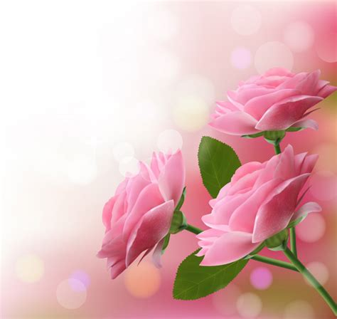 rozovyy tsvetok rozy fon vektornaya model svobodnyy vektor